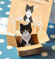 Black & White Cat In A Box Sticky Notes