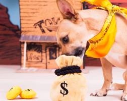 Bark & Co Take the Money and Run Toy
