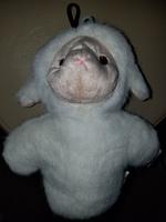 Lamb Squeaky Toy by Krislin