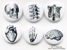 Set of 6 Anatomy Magnets