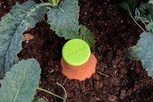 Growoya Porous Clay Irrigation Vessel