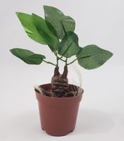 Mandrake Potted Plant Figure