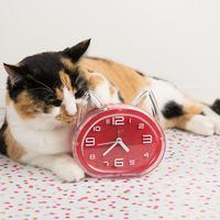 Retro Cat Clock with Alarm